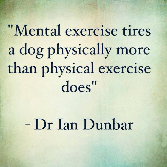 """""""Mental exercise tires a dog physically more than physical exercise does."""" - Dr. Ian Dunbar"""